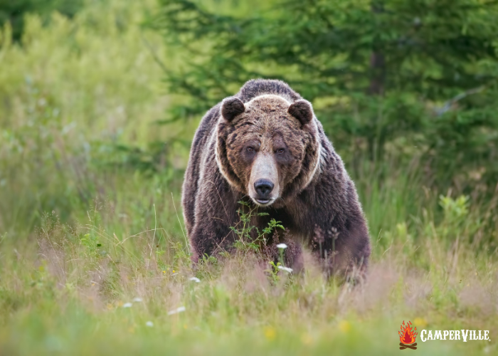 best bear spray for hiking and camping safety